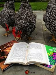 chickens reading