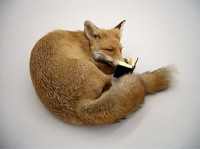 fox reading