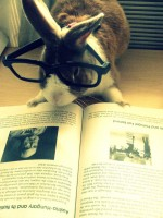 rabbit with glasses reading