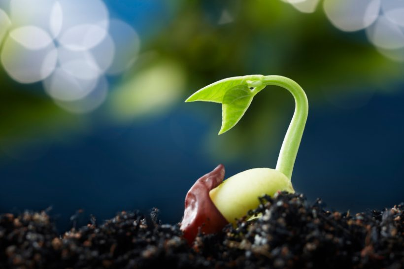 emerging-seed