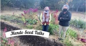 Mendo Seed Talks
